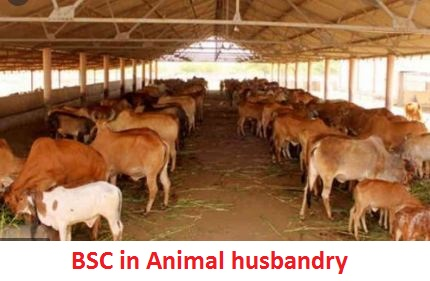 BSC in Animal husbandry