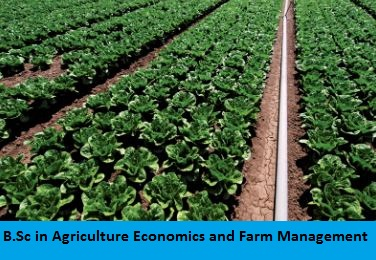 B.Sc in Agriculture Economics and Farm Management