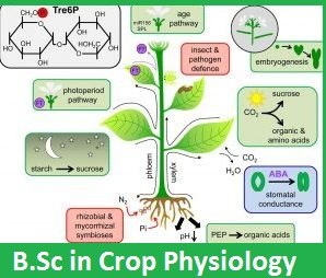 B.Sc in Crop Physiology