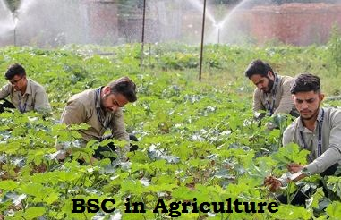 BSC in Agriculture