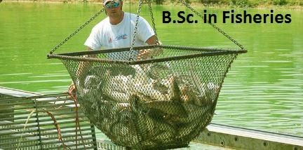 B.Sc. in Fisheries