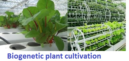 biogenetic plant cultivation